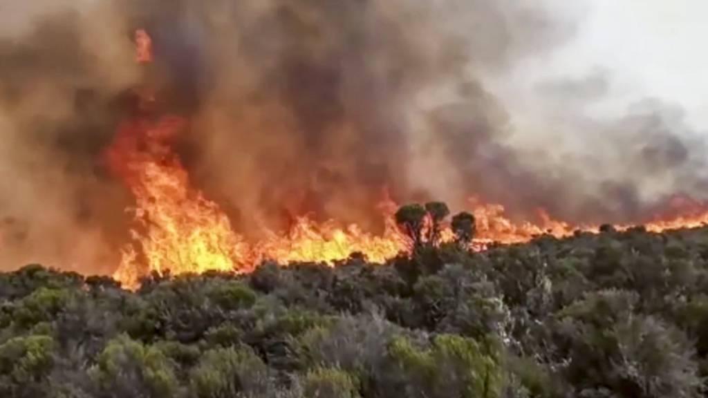 Brandschneisen und Hoffen auf Regen: Weiter Flammen am Kilimandscharo