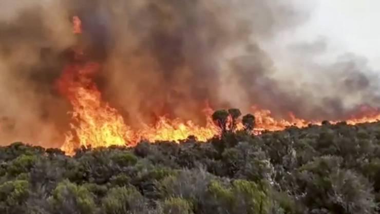SCREENSHOT - Flammen steigen aus einem Waldstück auf dem Kilimandscharo empor. Rettungsdienste versuchten, das Feuer auf dem mit 5895 Metern höchsten Berg Afrikas zu löschen. Foto: Uncredited/AP/dpa