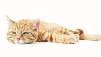 Mehr als nur für die Katz? Homöopathie-Kritiker behaupten, Globuli für Haustiere seien gefährlich.