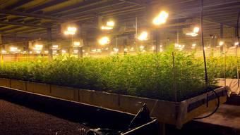 Die Hanfplantage verfügte über eine Bewässerungs-,Licht- und Belüftungsanlage (Symbolbild).
