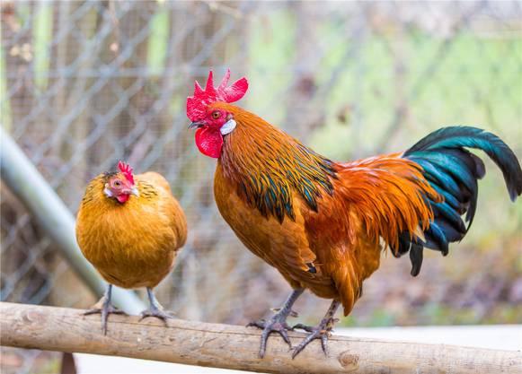 Für die meisten Tiere dauert der Aufenthalt im Durchschnitt etwa drei Monate.