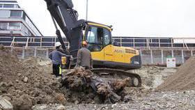 Ein archäologischer Schatz wurde 2013 in der Zürcher Binz gehoben. Uralte Bäume, die eine Menge zu erzählen wissen.
