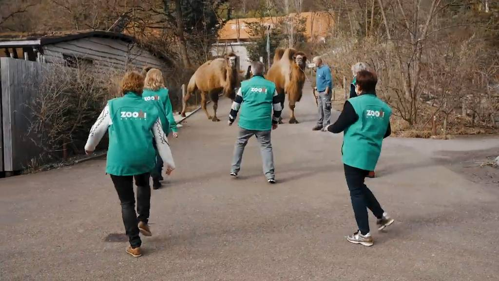 Freudentanz zur Wiederöffnung des Zoos Zürich