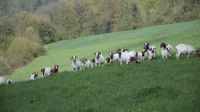 Bei der Familie Wüthrich auf dem Bauernhof Rütihof in Elfingen