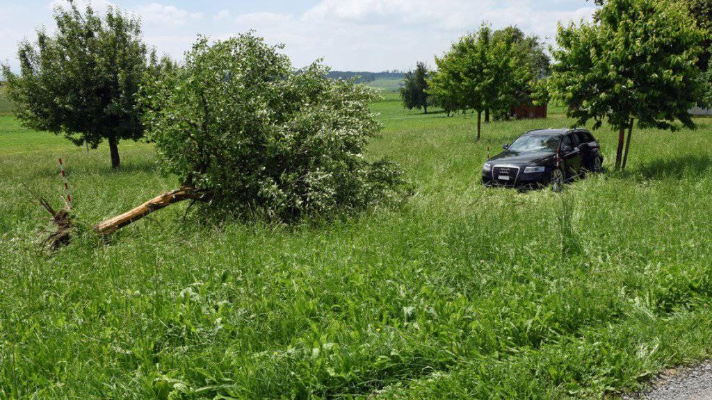 Das Auto kollidierte seitlich mit dem Apfelbaum und brachte diesen zu Fall.
