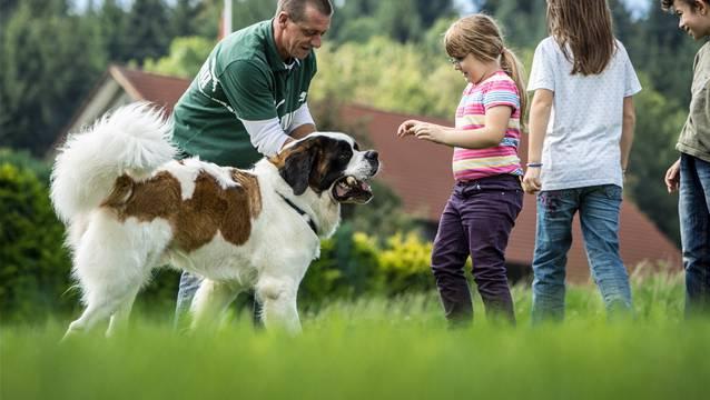 Bernhard Imbodens Bernhardiner Artus mag es, wenn er in der Pause mit den Kindern spielen kann.