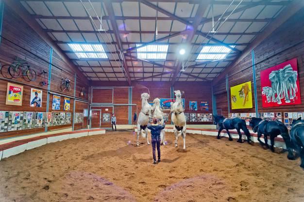 Franziska Nock trainiert täglich zweieinhalb Stunden mit ihren Pferden