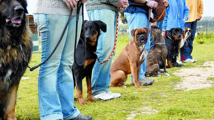 Bei Fuss: Seit September 2008 wird jeder neu erworbene Hund zusammen mit seinem Halter in einen Kurs geschickt. az