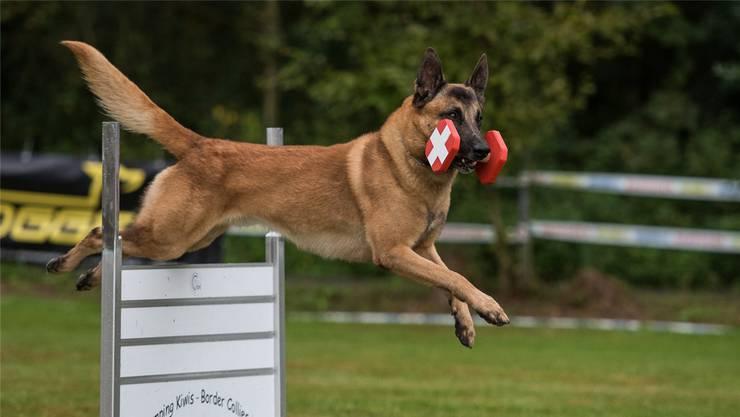 Hundeführer und Hund als Team, beide vertrauen einander, wobei der Hund diverse Übungen zu bewältigen hat. (zvg)