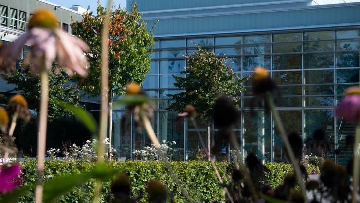Der Hauptsitz der A. Vogel AG in Roggwil. Aus den roten Sonnenhüten im Vordergrund wird Echinaforce hergestellt.
