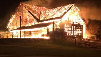 Bei einem Scheunenbrand in Hausen am Albis konnten Lamas und Pferde in Sicherheit gebracht werden – für die Kühe kam jede Hilfe zu spät.