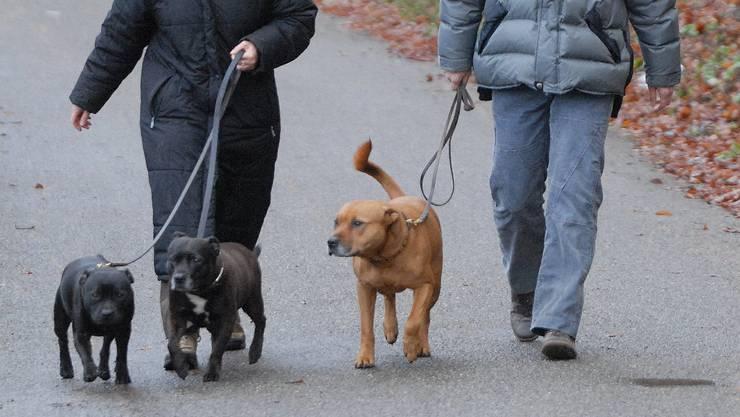 An der kurzen Leine: Kommt es endlich zu einer Bundeslösung, würde diese das Aargauer Hundegesetz nach heutigem Stand der Dinge wieder aushebeln. (Walter Schwager)