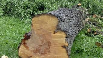 Ein von Feuerbrand befallener Baum ist gefällt worden (Archiv)