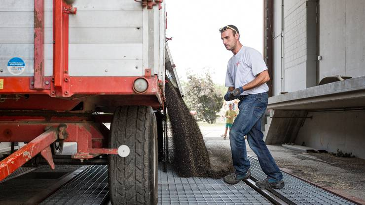 Markus Schmid bringt 17 Tonnen Raps zur Getreidesammelstelle.