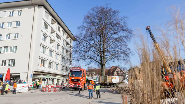 Monatelang wurde für den Erhalt der Rotbuche im Schlieremer Stadtzentrum gekämpft. Nun ist es soweit. Der Baum wird 150 Meter in Richtung Westen versetzt. Die Rotbuche muss dem Bau der Limmattalbahn und jenem