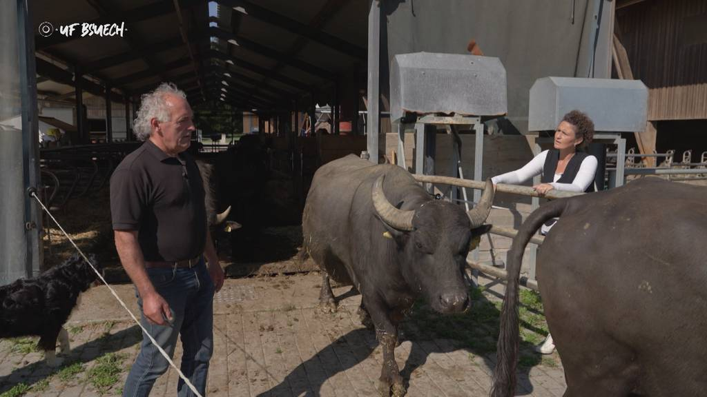 «Uf Bsuech» beim Wasserbüffel-Landwirt Josef Villiger