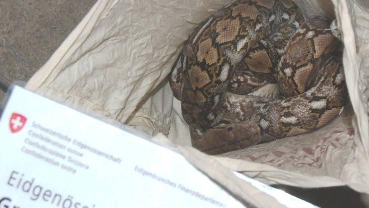 Ein Mann versucht sieben Phyton-Schlangen aus Frankreich in die Schweiz zu schmuggeln.