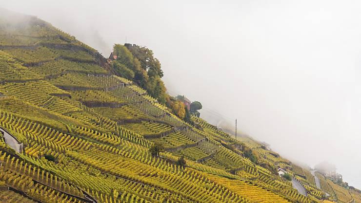Nebel über den Rebbergen von Lavaux. 2016 sorgten Witterungseinflüsse weltweit für Rückgänge bei der Weinproduktion. (Symbolbild)