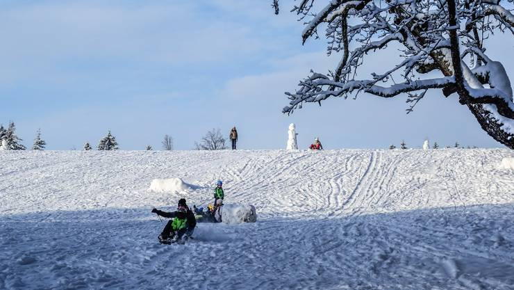 Auf dem Horben reicht der Schnee auch zum Schlitteln aus.