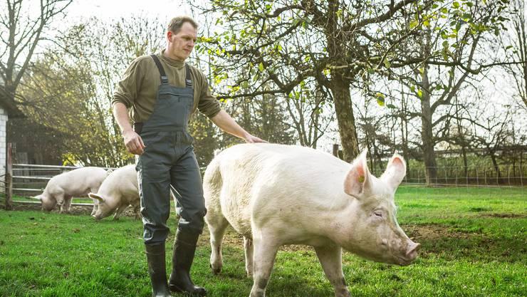 Im Betrieb von Alexander Räss leben rund 120 Zucht- und 650 Mastschweine.