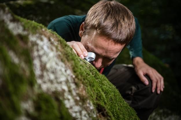 Im Wald bei Feldbrunnen-St. Niklaus untersucht er 20 Findlinge.