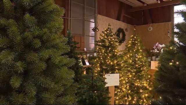 Plastik-Weihnachtsbaum im Trend: Zu Recht?