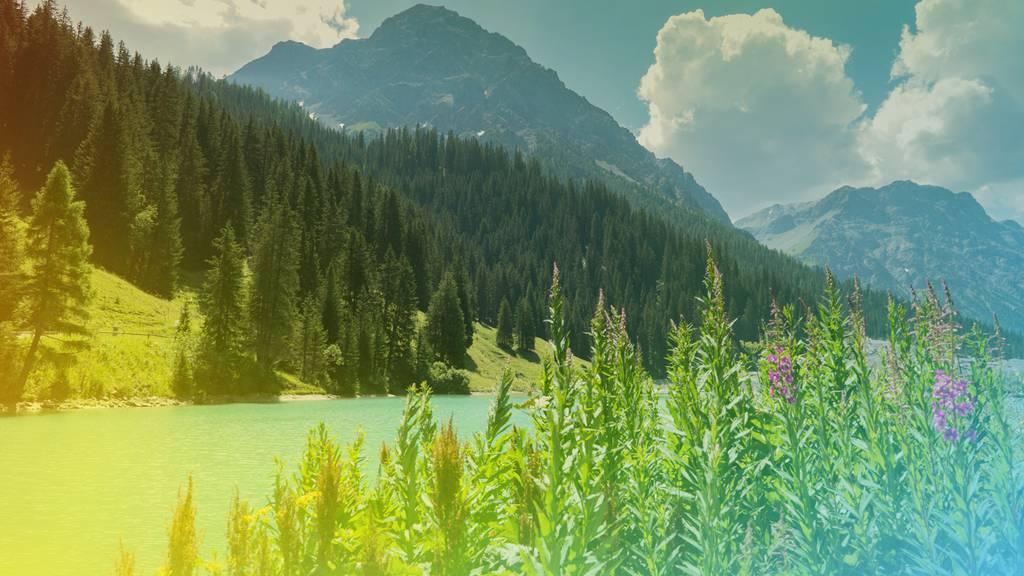 Teilnahmebedingungen - Graubünden oder nicht