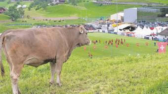 «Muhen mit den Nati-Stars!» Auch die Kühe verfolgen das erste öffentliche Training der Schweizer Nati in Weggis.
