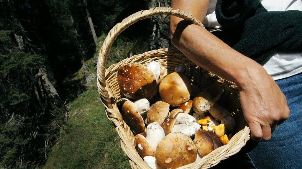 Doppelt so viele Fälle möglicher Pilzvergiftungen