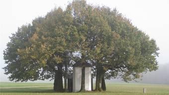 Die Buschbergkapelle ist heute als Kraftort bekannt. Vor 350 Jahren überlebte hier ein Müllermeister auf wundersame Art einen schweren Unfall.