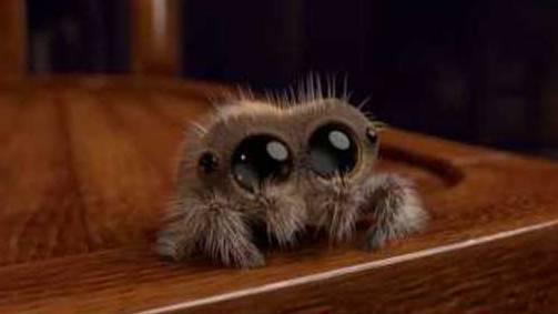 Der Hit im Netz: Lucas die Spinne