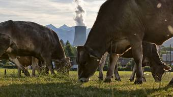 Atomkraftwerk: Nach der Stilllegung bis zur grünen Wiese dauert es weitere 15 Jahre