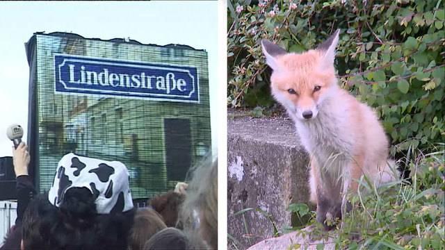 Das Ende der Lindenstrasse / Fuchsanlage Tierpark Goldau