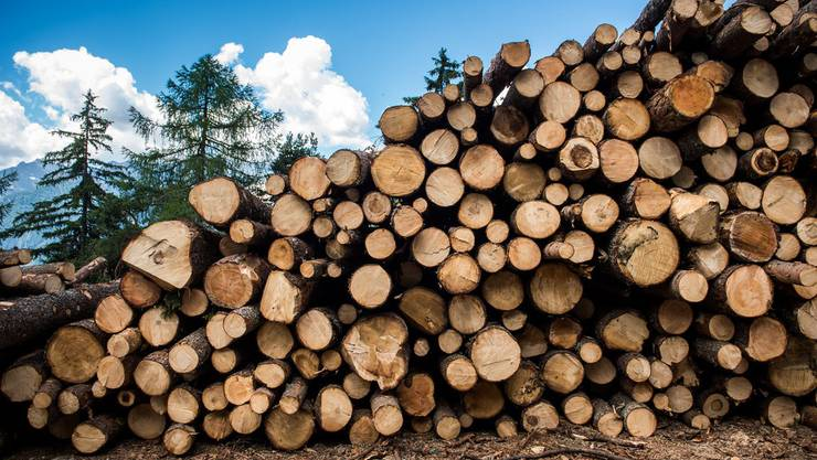 In der ganzen Schweiz müssen wegen des Borkenkäfers tausende Bäume gefällt werden. (Quelle: Keystone)