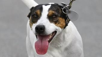 Leinenpflicht für Hunde (Symbolbild)