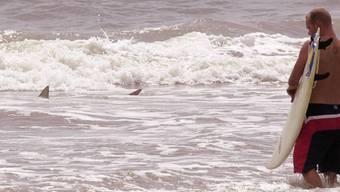 Ein Hai hat die Flitterwochen eines britischen Paares wüst beendet (Symbolbild)