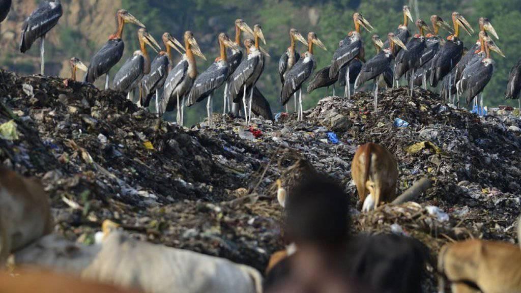 Störche auf einer Müllkippe - das Verhalten der Wandervögel könnte sich auf Ökosysteme auswirken (Archiv).