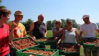 Frisch geerntet, werden die Erdbeerenschalen in Gitter abgepackt. Landwirtin Christa Siegrist (zweite von rechts) wird soeben eine Beere in den Mund gesteckt.