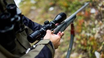Im neuen Wildtier- und Jagdgesetz soll es vor allem um die Bedürfnisse von wilden Tieren gehen. (Symbolbild)