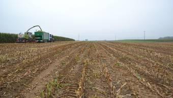 Jetzt gibts Mais: Die Maishäcksler holen im Surbtal die Ernte ein