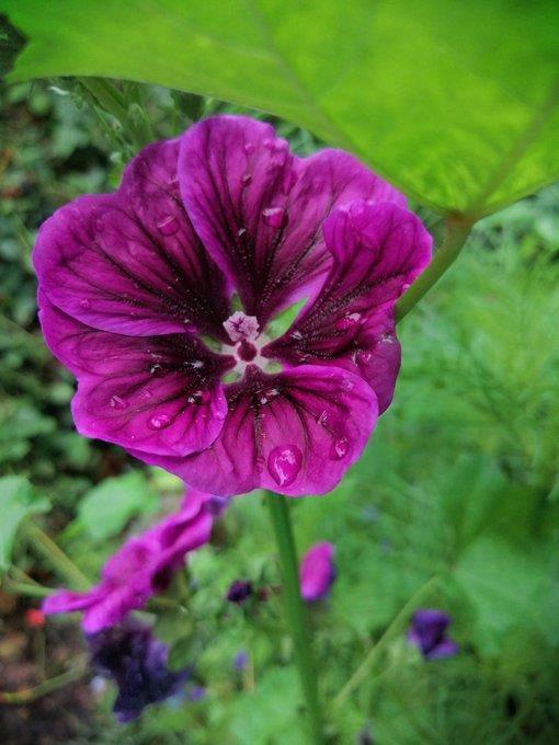 Natürliche Schönheit: Blumen aller Art (© twitter.com)