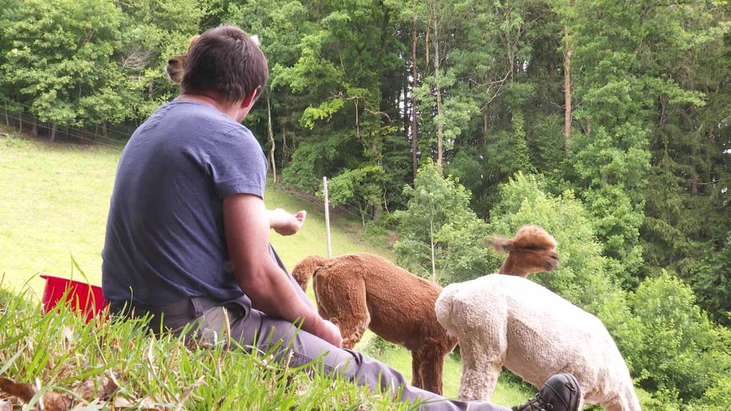 Ein Herz für Tiere: Vom Milchbetrieb zum Pensionshof