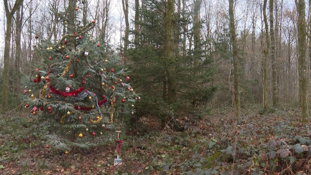 Waldweihnacht: Alternativ-Programm schadet tierischen Waldbewohnern