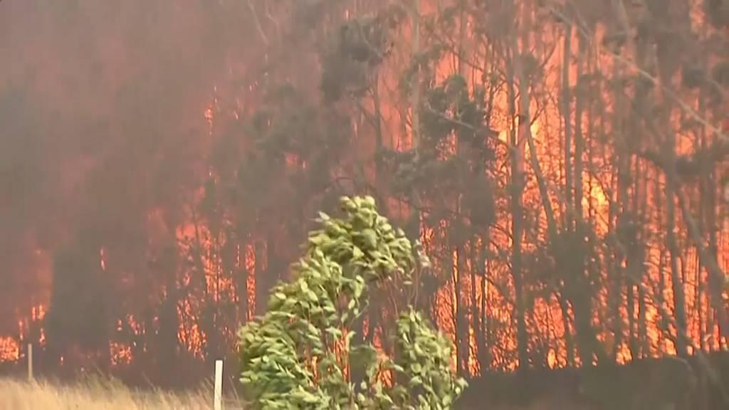 Die Waldbrände sind nicht zu bändigen