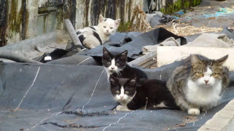 Zuviel Katzen-Elend in der Schweiz