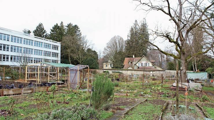 Wo heute Gärten sind, könnte ein neuer Hort entstehen – wenn es ihn denn braucht.