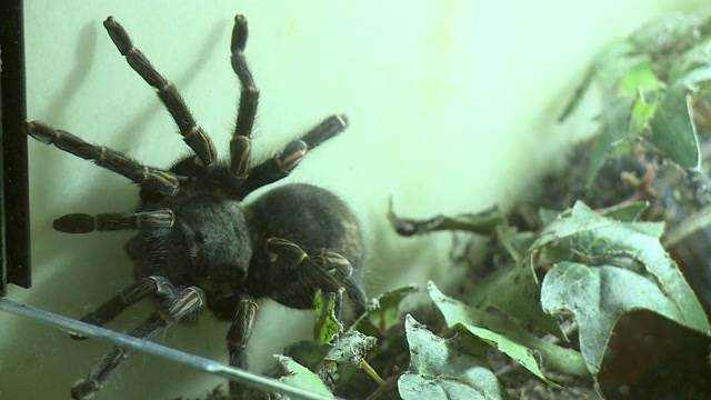 Ausstellung gegen Spinnenphobie