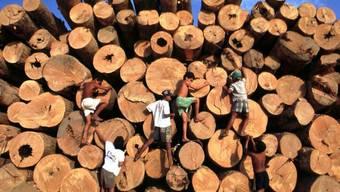 Tropenholz aus Brasilien (Archiv)