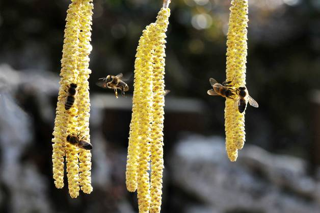 Kommen die Bienen nicht heraus, ist's mit dem schönen Wetter aus.