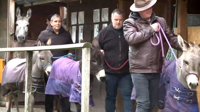 Experten bieten Training für Samichlaus-Esel (und Schmutzlis) an